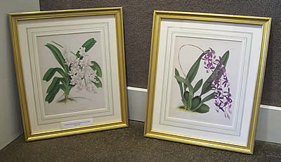 framed antique prints at Station Gallery