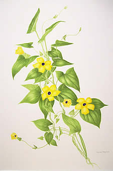 Virginia Fitzpatrick  botanical watercolors at Station Gallery