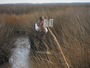 Michele Green painting in the marsh